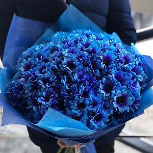 Букет из 201 синей ромашки , Lotus Flower
