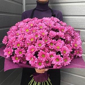 Букет из 301 ромашки в оформлении, Lotus Flower