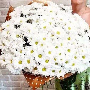 Букет из 301 белой ромашки в оформлении, Lotus Flower