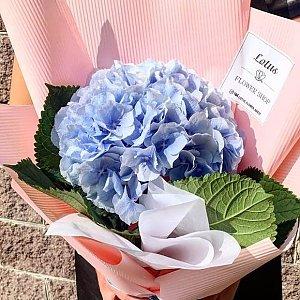 Синяя гортензия в дизайнерском оформлении, Lotus Flower