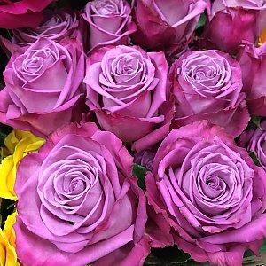 Роза Моди Блу 60см, Времена Года