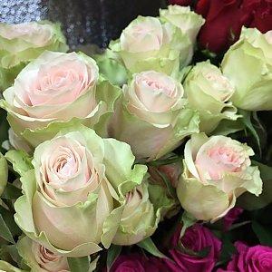Роза Фрутетта 60см, Времена Года