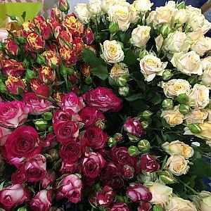 Роза кустовая белая 60см, Времена Года
