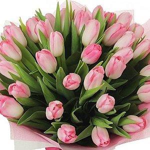 Букет 35 розовых тюльпанов, Лаванда - Бобруйск
