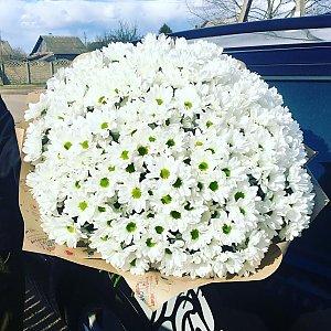 Букет Три сотни ромашек, FRESH FLOWERS