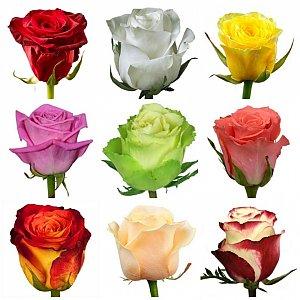 Роза , FRESH FLOWERS