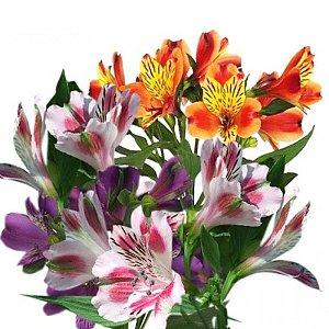 Альстромерия, FRESH FLOWERS