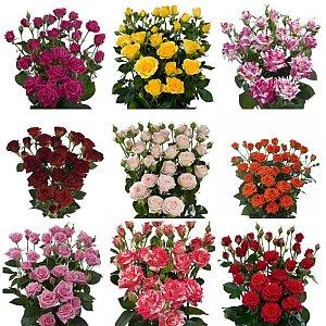 Роза кустовая, FRESH FLOWERS
