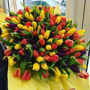 Букет из 101 разноцветного тюльпана, Лора
